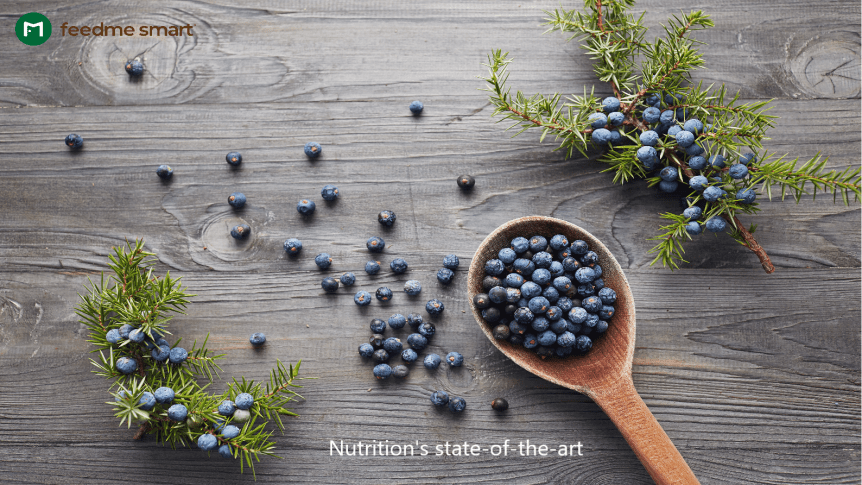 Juniper Berries for Viruses
